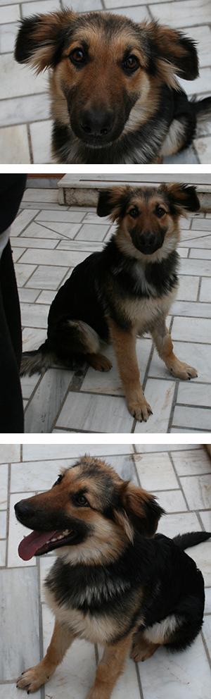 aflivning af hunde