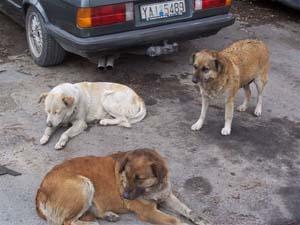 mange hunde på et billede